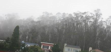 cloud forest june 24 09 003