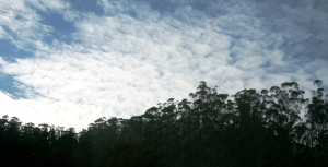 mount sutro forest and cloudscape