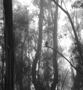Dusk, mist, Great Horned Owl