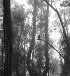 Dusk, mist, Great Horned Owl