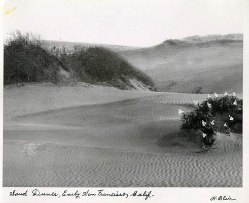 Sand Francisco
