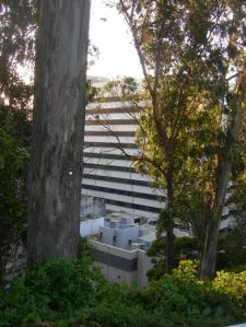 Building behind the trees
