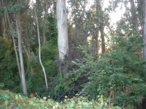 Edgewood Forest