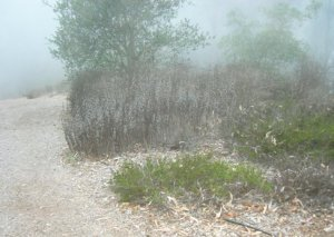 Though foggy, it's dry in the native garden...