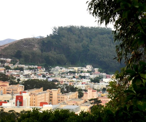 Sutro's future? The receding treeline of Mt Davidson