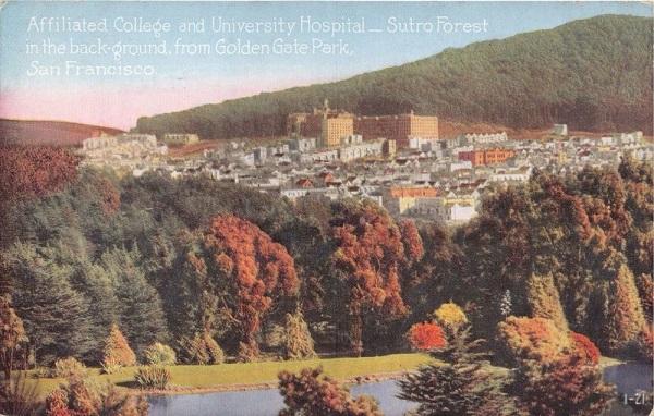 Sutro Forest 1910 postcard sm