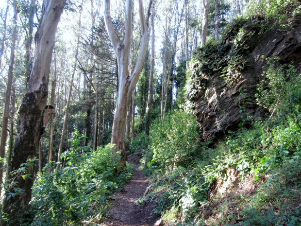 upper historic trail in Sutro Forest