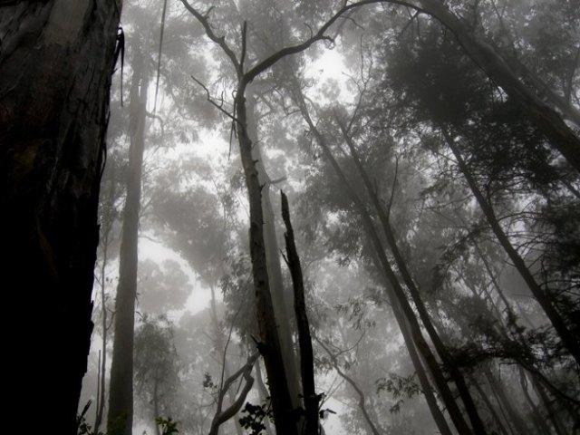 Cloud forest - September 2010