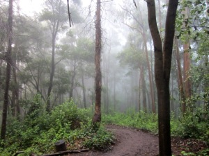 cloud forest, muddy trail