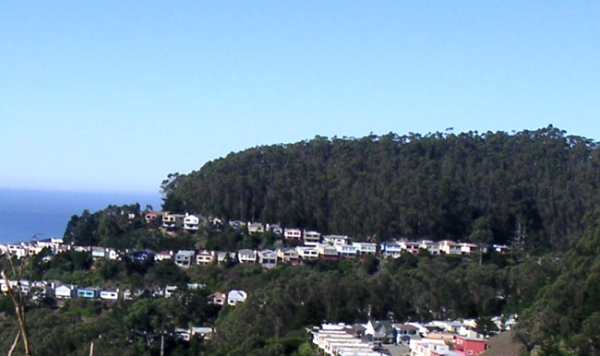 Mount Sutro forest viewed from southeast (Twin Peaks)
