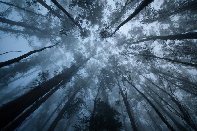 Mount Sutro Cloud Forest