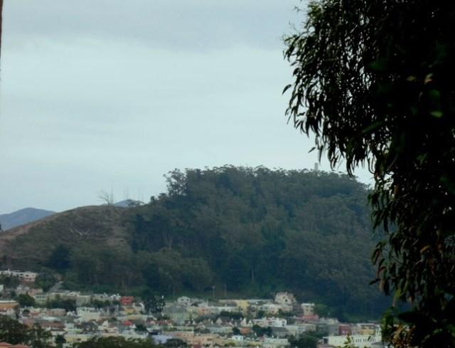 mount davidson forested 2009