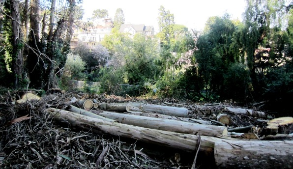 Felled trees in the Interior Greenbelt