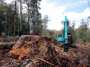 Protestor on a felled tree stump - Tasmania