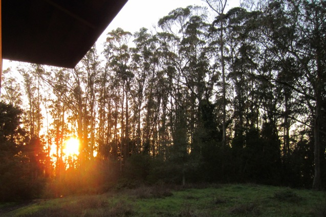 sunset in Sutro Forest
