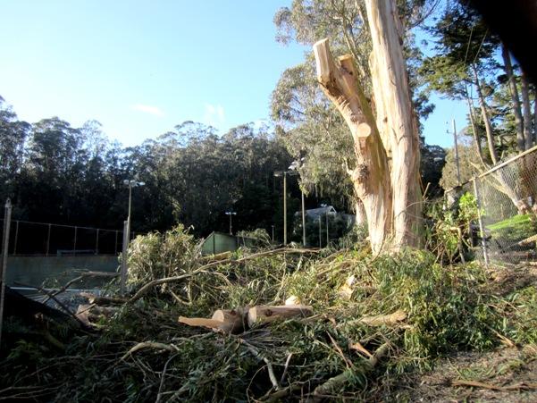 Tree-felling in Glen Canyon, San Francisco