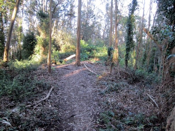 cleared area