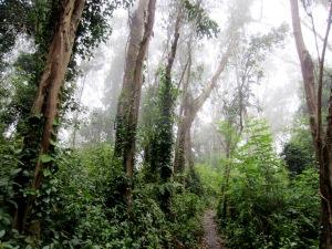 sutro forest path