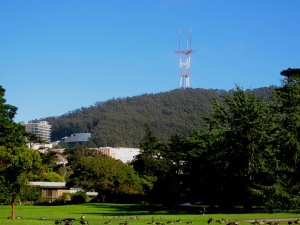 sutro tower with UCSF and  forest seen from botanic gardens