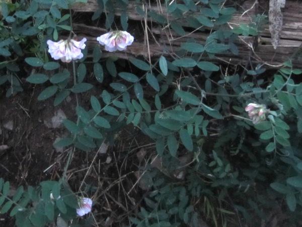flower tbd