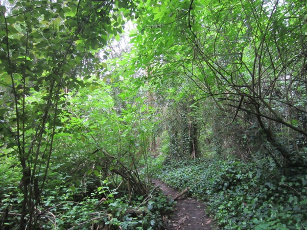green trail - Mount Sutro Forest