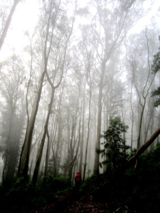hiker in Sutro Forest