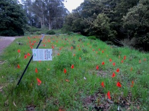 Native Plant replanted meadow