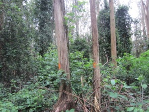 orange blob trees - Mount Sutro Forest