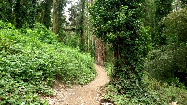 lower historic trail 2 - Tony Holiday