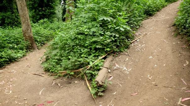 lower historic trail 4 - Tony Holiday