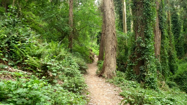 lower historic trail - Tony Holiday