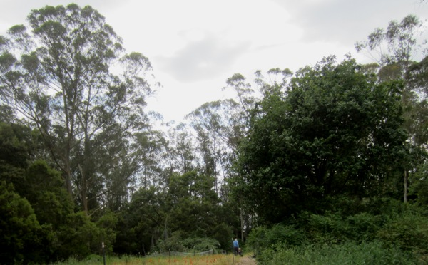 Mount Sutro Forest with visitors