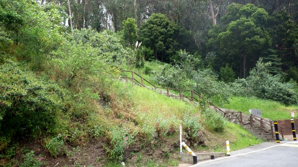 Hiking Through Mount Sutro Forest by Tony Holiday (Part I