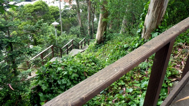 Stairs up into the forest - Tony Holiday