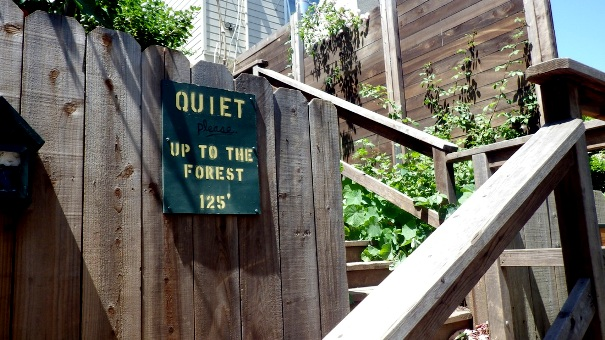 trailhead at Stanyan - quiet up to the forest - Tony Holiday