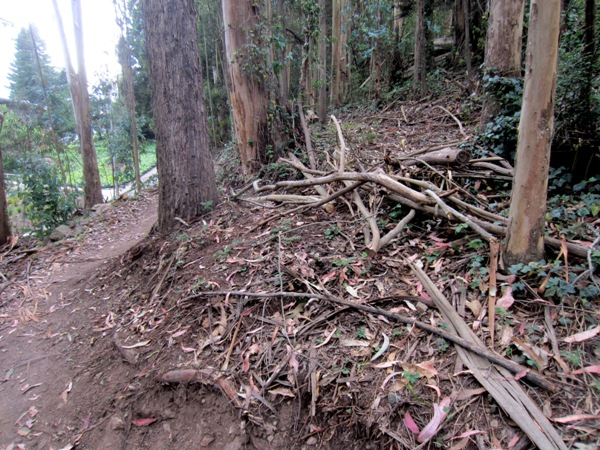 understory removed along East Ridge trail