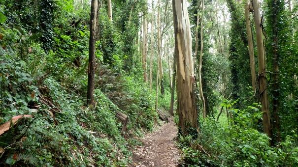 Upper Historic Trail - Tony Holiday