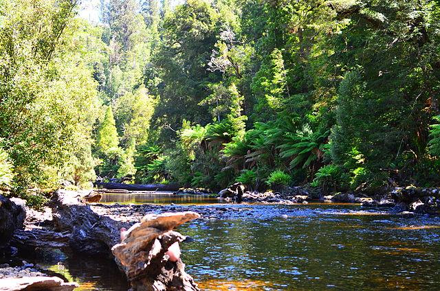 Forest, Styx River, Tasmania - Source Wikimedia Commons - melissaaubrey1981