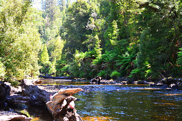 Forest, Styx River, Tasmania - Source Wikimedia Commons - melissaaubrey1981