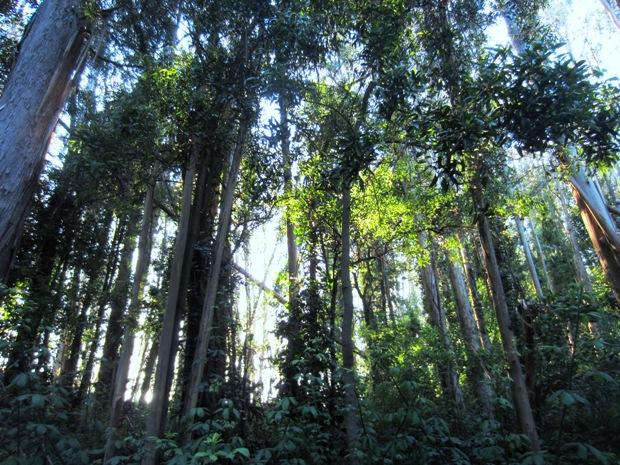 sutro forest 3