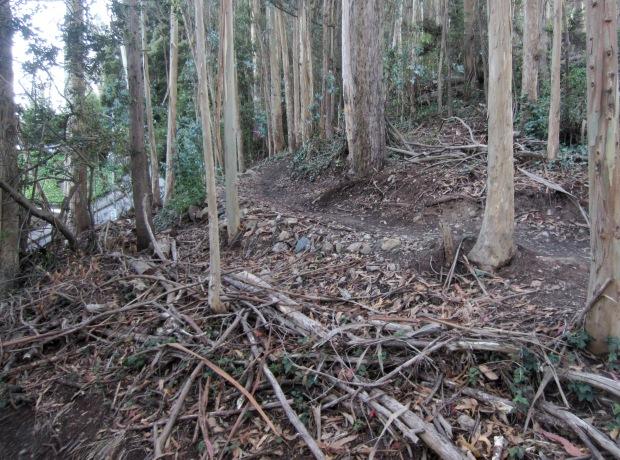 Sutro Forest East Ridge trail near Aldea campus