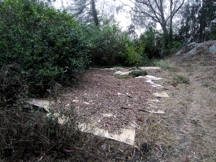 cardboard and mulch in Native Plant Garden on Mt Sutro 2