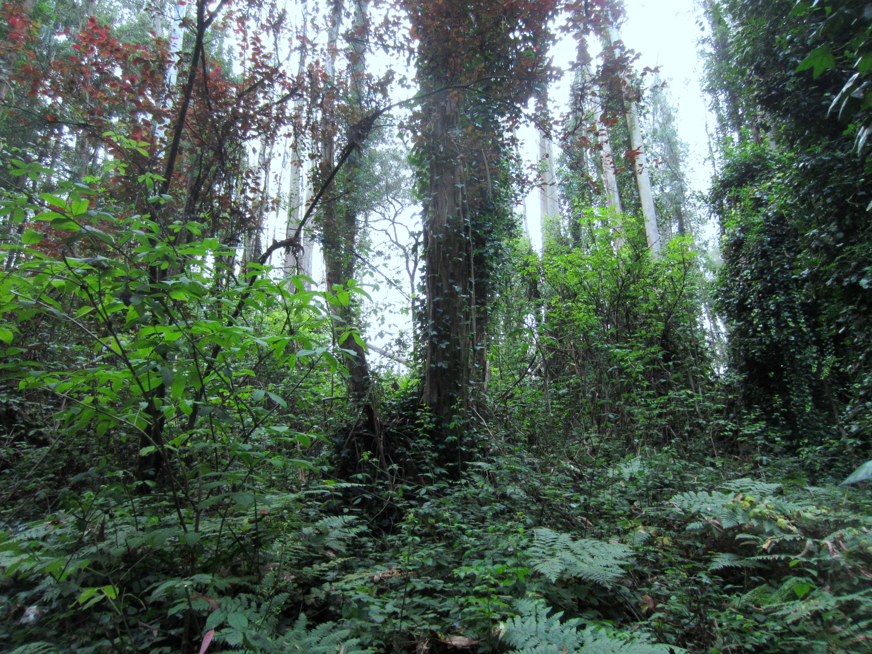 Sutro Cloud Forest Is Foggy While Fires Burn Elsewhere
