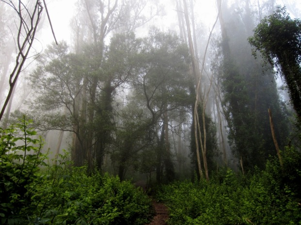 fog in the forest 4