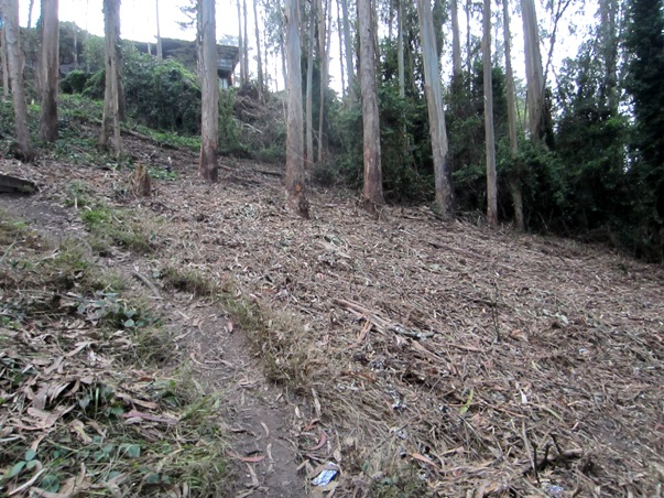 belgrave trail ends in woodchips