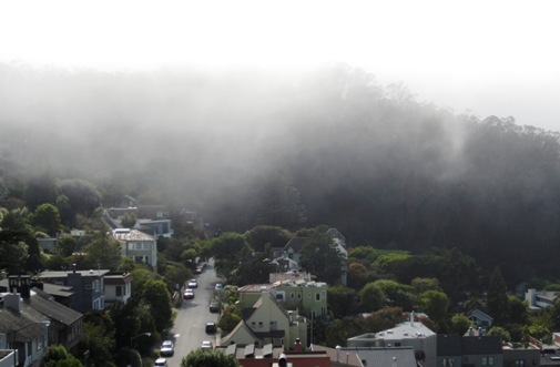 Mt Sutro Forest - East side