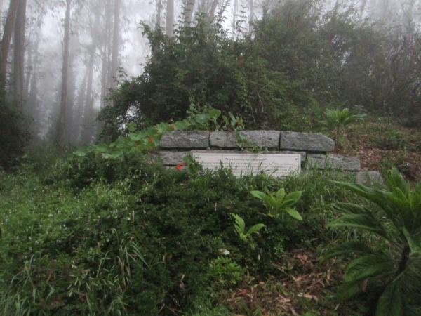 Mt Sutro Forest native plant garden sign