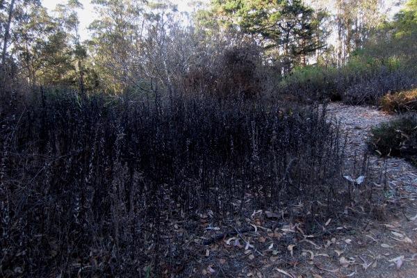 native garden dry