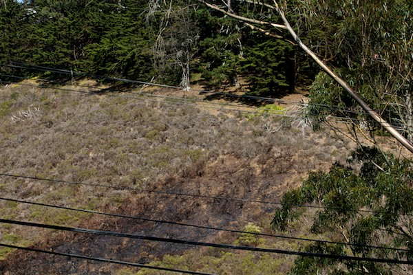 Native Plant fire scorch above Laguna Honda San Francisco 1