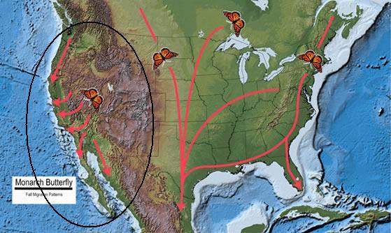 fallmigrationmap usfws
